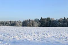 El paisaje del campo nevado y los árboles son spruce y abedul Foto de archivo