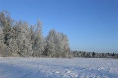 El paisaje del campo nevado y los árboles son spruce y abedul Foto de archivo libre de regalías