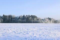 El paisaje del campo nevado y los árboles son spruce y abedul Fotos de archivo