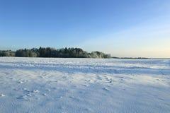 El paisaje del campo nevado y los árboles son spruce y abedul Imagenes de archivo