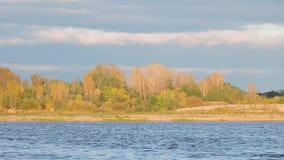 El paisaje del otoño, árboles con las hojas amarillas se sacude en el viento cerca del río metrajes