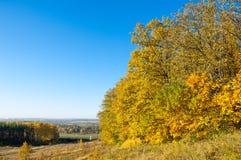 El paisaje del otoño, árboles de arce del roble de los abedules fue pintado en otoño Imagen de archivo