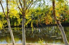 El paisaje del otoño cerca de un lago con amarillo se va en árboles en caída fotos de archivo