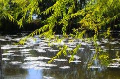 El paisaje del otoño cerca de un lago con amarillo se va en árboles en caída imagen de archivo libre de regalías