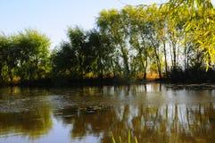 El paisaje del otoño cerca de un lago con amarillo se va en árboles en caída foto de archivo