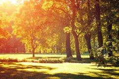 El paisaje del otoño, parque del otoño adentro con los árboles de oro del otoño se encendió por luz del sol Fotos de archivo libres de regalías