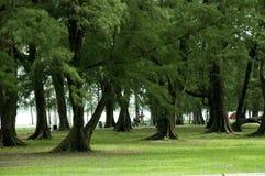 El paisaje del parque de la mañana Imagen de archivo