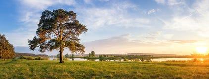 El paisaje del verano ayuna del río de Ural con los árboles en el banco de Rusia, junio Foto de archivo libre de regalías
