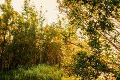 El paisaje en la salida del sol Foto de archivo libre de regalías
