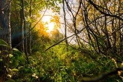El paisaje en la salida del sol Imagenes de archivo
