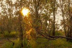 El paisaje en la salida del sol Imagen de archivo libre de regalías