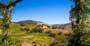El paisaje en valle hace el Duero, Portugal Fotografía de archivo libre de regalías