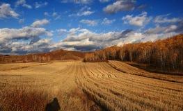 El paisaje espectacular del prado de Inner Mongolia Fotos de archivo libres de regalías