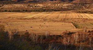 El paisaje espectacular del prado de Inner Mongolia Imagenes de archivo