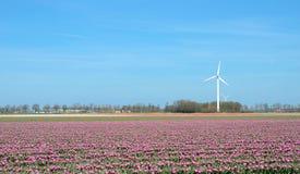 El paisaje fantástico con los molinoes de viento y el tulipán colocan en cuesta en colores pastel Imagen de archivo