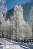 El paisaje fino de las montañas del invierno Día asoleado Disminución del invierno Los colores brillantes Río del bosque del bosq Imagen de archivo