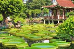 El paisaje hermoso con las flores de loto, Santa Cruz del jardín waterlily florece y las hojas Fotos de archivo