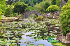 El paisaje hermoso con las flores de loto, Santa Cruz del jardín waterlily florece y las hojas Imágenes de archivo libres de regalías