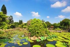 El paisaje hermoso con las flores de loto, Santa Cruz del jardín waterlily florece y las plantas acuáticas Fotografía de archivo libre de regalías