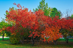 El paisaje hermoso de los árboles de la caída Fotos de archivo
