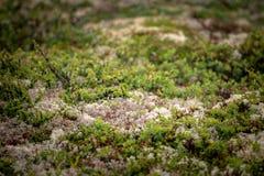 El paisaje hermoso de Noruega en el verano Foto de archivo
