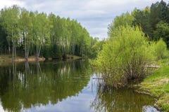 El paisaje hermoso del agua reflejó en el abedul de agua Imagenes de archivo