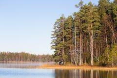 El paisaje hermoso del otoño con amarillo se va en humedales Paisaje del pantano en caída Foto de archivo