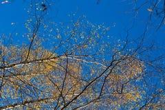 El paisaje hermoso del otoño con amarillo se va en humedales Paisaje del pantano en caída Fotografía de archivo