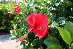 El paisaje hermoso en parque y flor roja es brlliant Imagenes de archivo