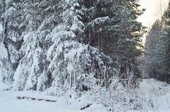 El paisaje hivernal del paisaje con la rama de árbol de pino cubrió nieve Fotos de archivo