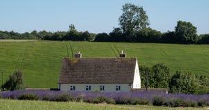 El paisaje inglés rural con lavanda de desatención de la casa blanca coloca en una granja de la flor en el Cotswolds Colina verde Imagenes de archivo