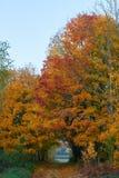 El paisaje lituano hermoso del otoño, árbol maravillosamente pintado se va imagen de archivo libre de regalías