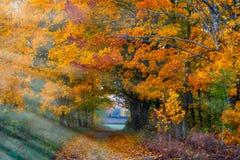 El paisaje lituano hermoso del otoño, árbol maravillosamente pintado se va foto de archivo libre de regalías