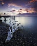 El paisaje marino de un pedazo de madera de deriva se lavó para arriba a lo largo de la costa costa en la puesta del sol fotografía de archivo libre de regalías