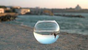 El paisaje marino maravilloso del embarcadero de la ciudad reflejó en pequeños pescados del fishbowl redondo que los splendens de almacen de metraje de vídeo