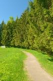 El paisaje natural en la primavera Fotos de archivo