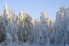 El paisaje nevado del bosque del invierno, iluminado por puesta del sol irradia Imagenes de archivo