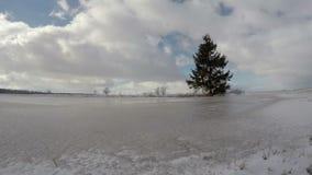 El paisaje nevoso helado del invierno con el árbol de abeto solo y las nubes indican, el lapso de tiempo 4K almacen de metraje de vídeo