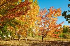El paisaje otoñal de los árboles Foto de archivo libre de regalías