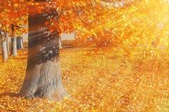 El paisaje pintoresco del otoño del parque del otoño de la puesta del sol se encendió por la sol - parque del otoño en sol de la  Fotos de archivo