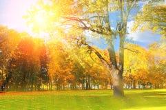 El paisaje pintoresco del otoño del parque del otoño de la puesta del sol se encendió por la sol - parque del otoño en sol de la  Foto de archivo libre de regalías