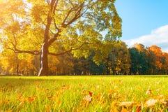 El paisaje pintoresco del otoño en parque soleado del paisaje del otoño se encendió por la luz del sol - parque del otoño en sol Fotografía de archivo