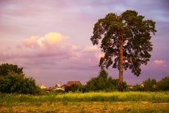 El paisaje rústico con los árboles y el cielo colorido en la puesta del sol imagen de archivo libre de regalías