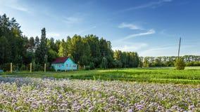 El paisaje rural con una pequeña casa y la lavanda colocan las flores de Rusia, los Urales Fotos de archivo