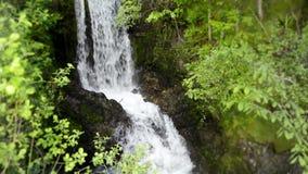 el paisaje salvaje constante hermoso de la naturaleza 4k tiró de la pequeña cascada del río del acantilado de piedra en bosque ve almacen de metraje de vídeo