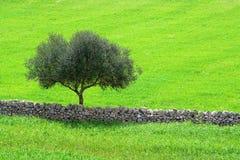 El paisaje siciliano Fotos de archivo