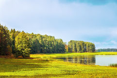 El paisaje soleado del otoño del río y del otoño de Soroti amarilleó árboles forestales en Pushkinskiye sangriento, Rusia Foto de archivo
