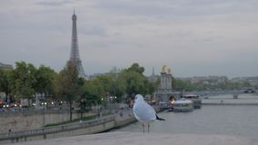 El paisaje urbano de París con la costa, la torre Eiffel y el vuelo gull almacen de video