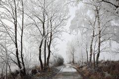 El paisaje y la nieve del invierno envolvieron árboles en Sumava, República Checa, Fotografía de archivo libre de regalías
