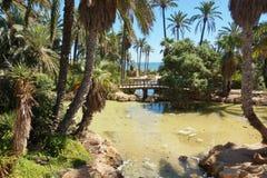 EL Palmeral 1 Photo libre de droits